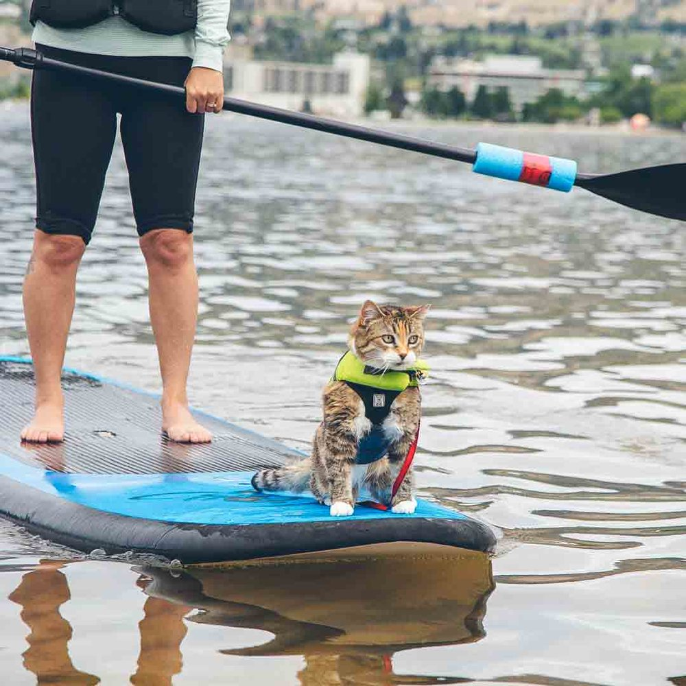 Best Cat Life Jacket 2020 – Price & Review